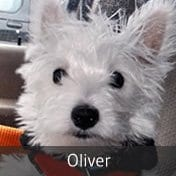 plastic surgery oliver
